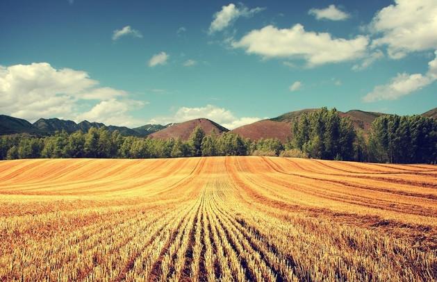 Кредит под залог земли сельскохозяйственного назначения